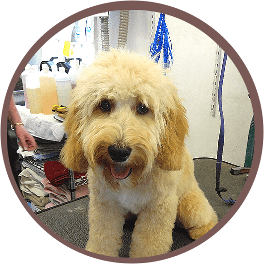 Professional dog grooming by qualified, experienced staff that truly love what they do and care for your dog like their own